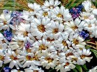 Вышиваем лентами цветы