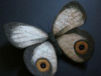 Вышитые бабочки